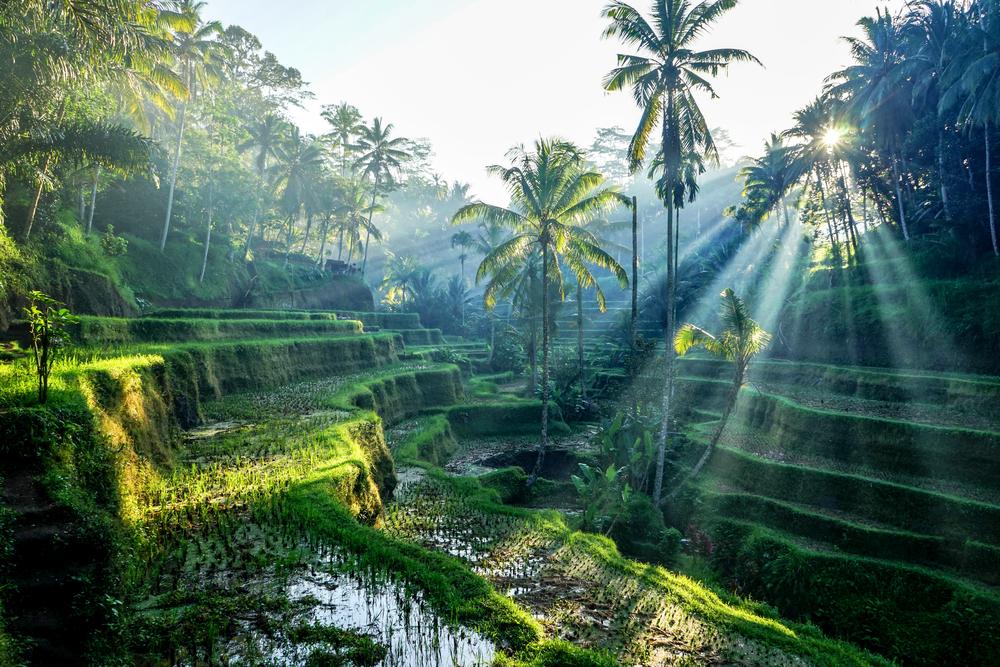 Ubud, Bali: Rice Terraces