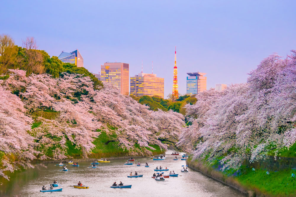 Cherry Blossom Festivals 2019: Tokyo, Japan