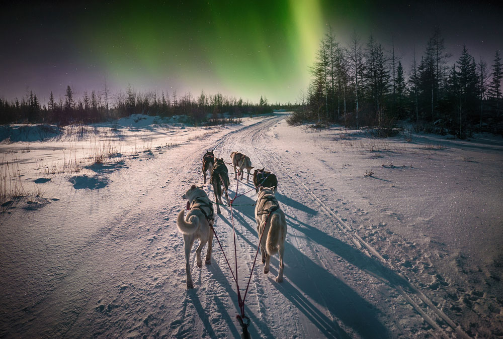 See the Northern Lights: Dogsledding under the Northern Lights